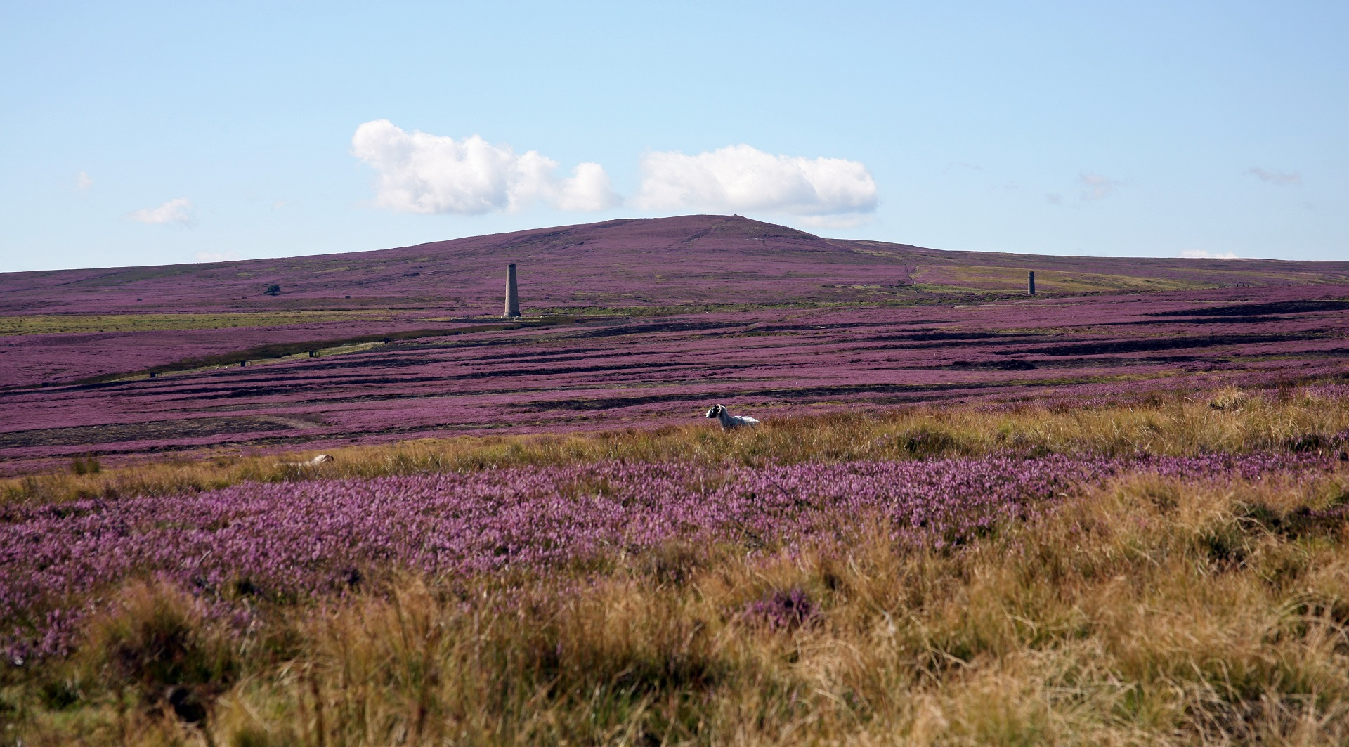 Heather moors 5